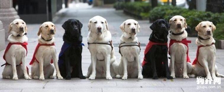 遇到导盲犬的6大禁忌